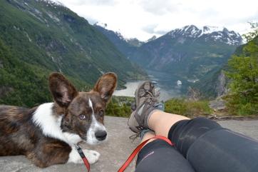 Tito, mi perrito en Gairanger Noruega